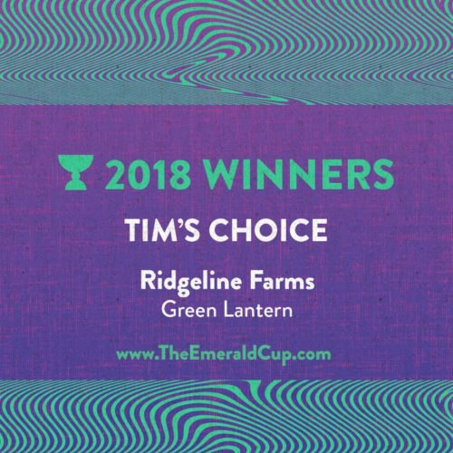 Tim's Choice Winner
